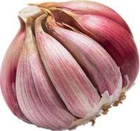 Garlic bulb, food as medicine
